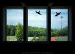 Through window...